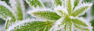 7 consejos para cuidar tus plantas en los meses más frios