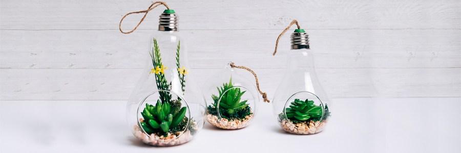 plantas suculentas
