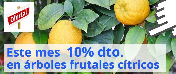 Descuento en árboles frutales cítricos