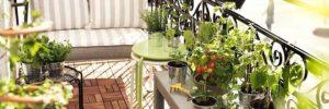 ¿Qué hacer con nuestras plantas cuando nos vamos de vacaciones?