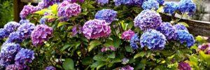 5 plantas perfectas para el invierno
